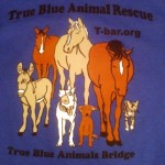 ABLE T-shirt front
