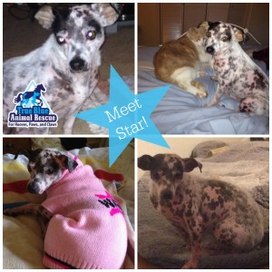 True-Blue-Animal-Rescue-Foster-Feature-Star