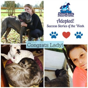 True-Blue-Animal-Rescue-Success-Story-Adopted-Lady