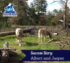 True-Blue-Animal-Rescue-Texas-Success-Donkey-Albert-and-Jasper