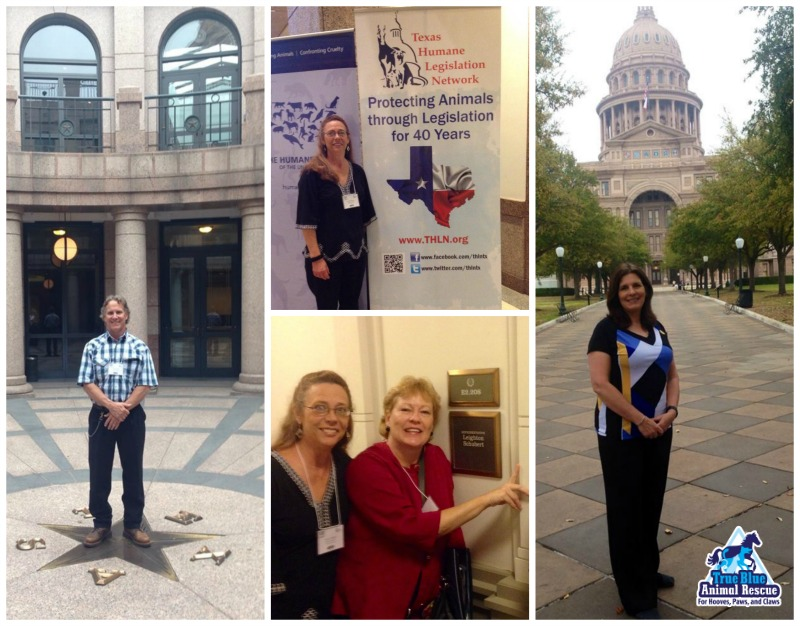 True-Blue-Animal-Rescue-Texas-Texas-Humane-Legislation-Network-2015