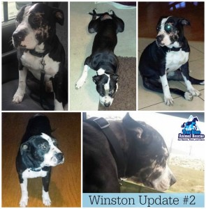 True-Blue-Animal-Rescue-Texas-Winston-Update-2