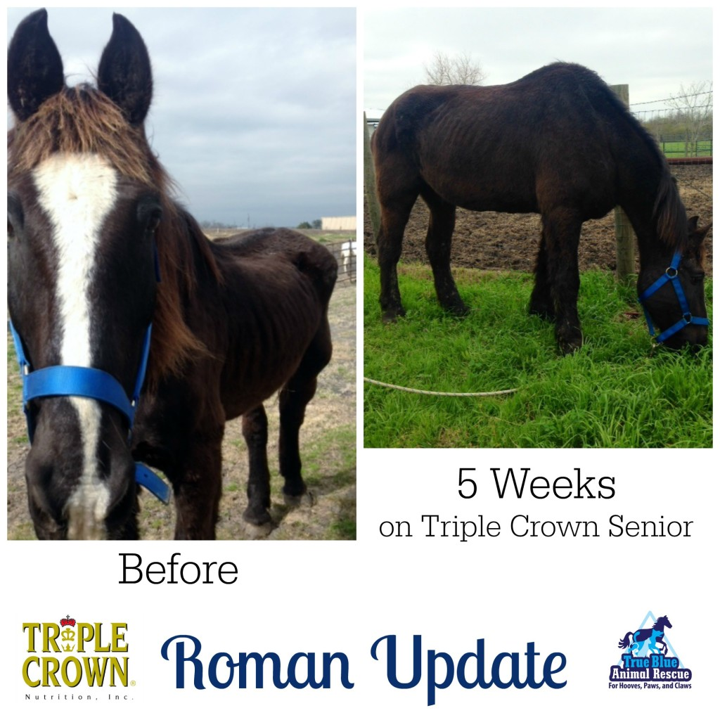 True-Blue-Animal-Rescue-Triple-Crown-Nutrition-Roman-Update-March-2015-2