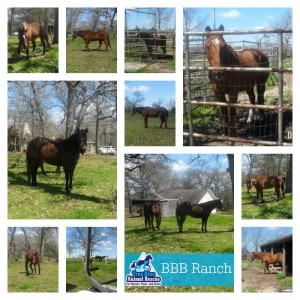 True-Blue-Animal-Rescue-2015-BBB-Ranch