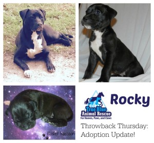 True-Blue-Animal-Rescue-Throwback-Success-Rocky