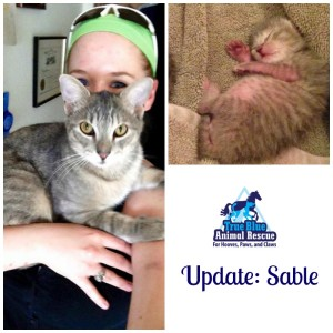 True-Blue-Animal-Rescue-Throwback-Thursday-Sable-March-2015