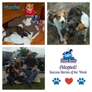 True-Blue-Animal-Rescue-Adopted-Mocha