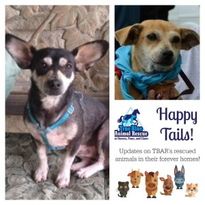 True-Blue-Animal-Rescue-Happy-Tails-Anna