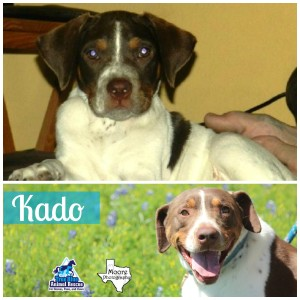 True-Blue-Animal-Rescue-Texas-Kado