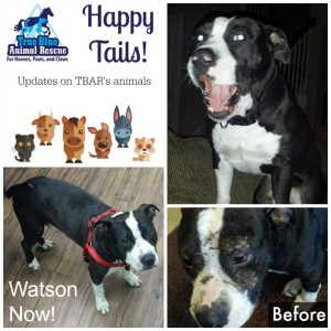 True-Blue-Animal-Rescue-Watson-Happy-Tail