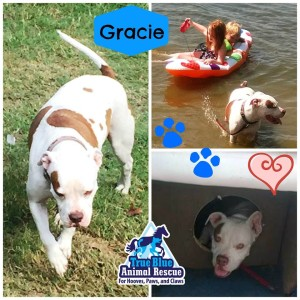 TBAR-Adopted-Dog-Gracie