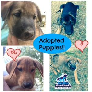 TBAR-Adopted-Puppies-August
