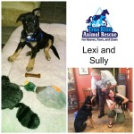 TBAR-Texas-Animal-Rescue-Lexi