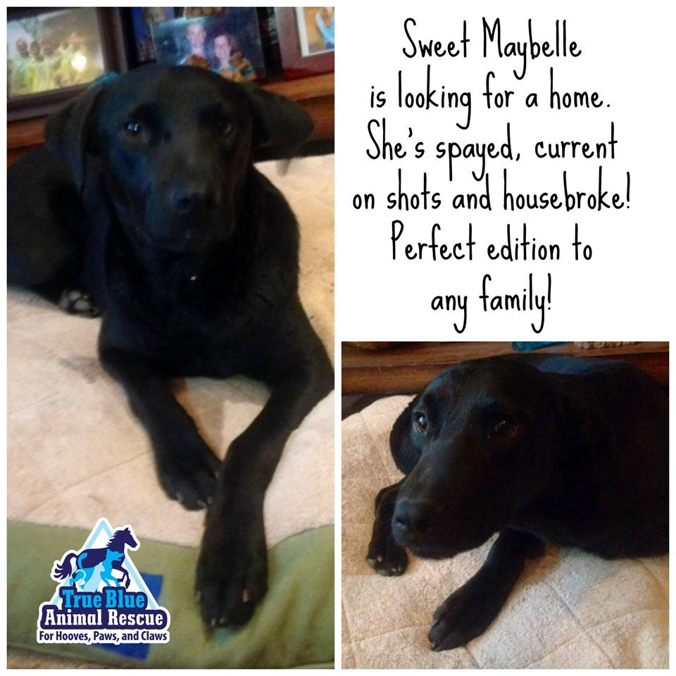 TBAR-Adoptable-Maybelle-Dog