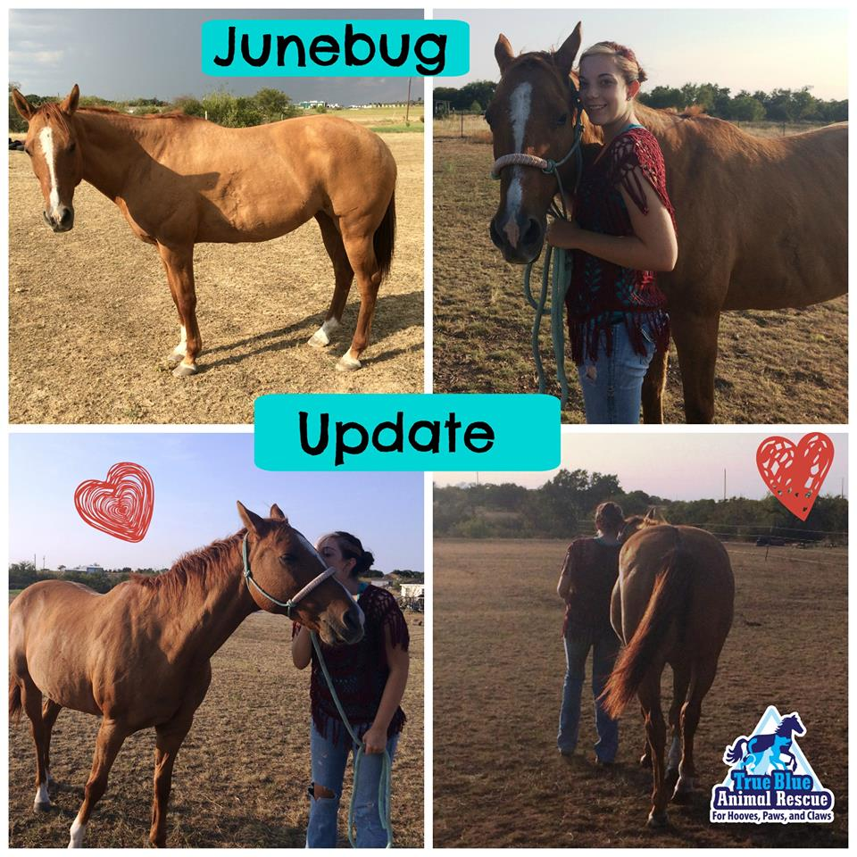 TBAR-Adoption-Update-Junebug