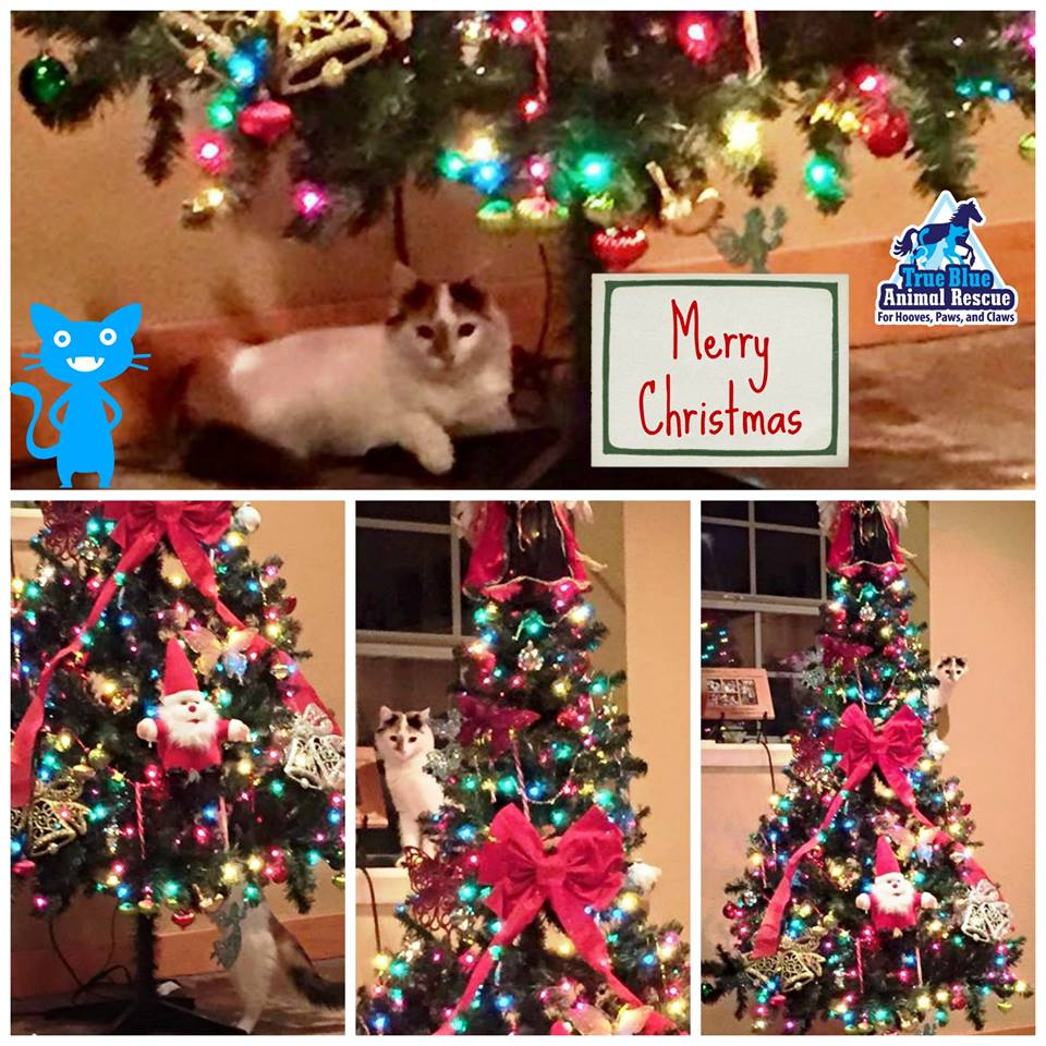 TBAR-Christmas-Willow-Cat