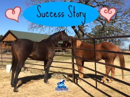 TBAR-Success-Harry-Horse