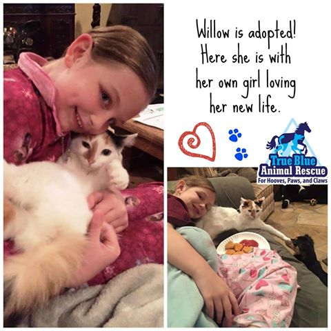 TBAR-Success-Willow-Cat-Adopted