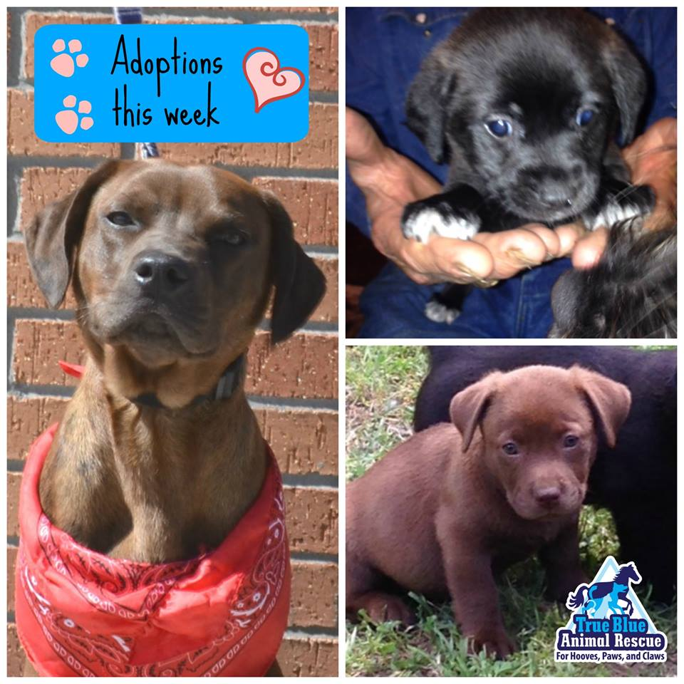 TBAR-Adoptions-March-2016