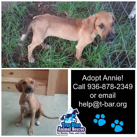 TBAR-Adoptable-Dog-Annie